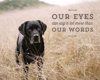 Lessons From the Water bowl - Volume 2 - Prints - Our Eyes