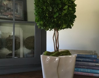 Preserved Square Boxwood Topiary