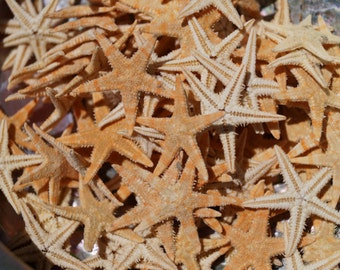 Bulk Tiny Starfish for Craft, 500 Pieces, Wholesale Starfish, Flat Starfish, Brown Starfish, Craft