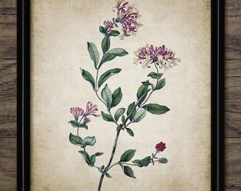 Vintage Flower Print - Flower Illustration - Botanical Flower Art - Floral Decor - Botanical Art - Single Print #1340 - INSTANT DOWNLOAD