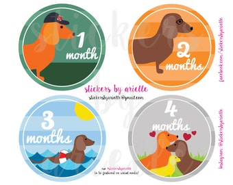 Month by Month Unisex Baby Stickers - Dachshund