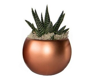 """Magnetized Luxe Planter with Live Plant - 3 x 3 x 5"""" - Copper"""