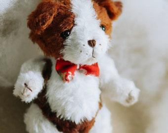 Jes Teddy puppy