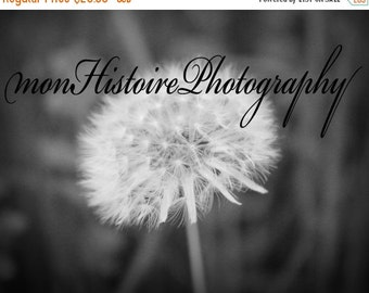 25% off Black and White Dandelion, Nature Photography