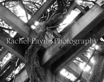 Weaving - Original Photograph