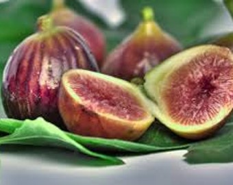 Mediterranean Fig 4 oz fragrance oil for candles/ bath and body products.....scent
