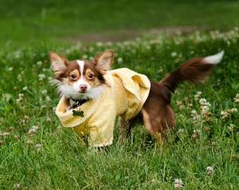 The Dog Bathrobe - Yellow Terry Cloth