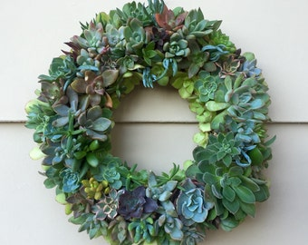 """DIY 9"""" Succulent Wreath   The perfect holiday gift for you or your loved ones."""