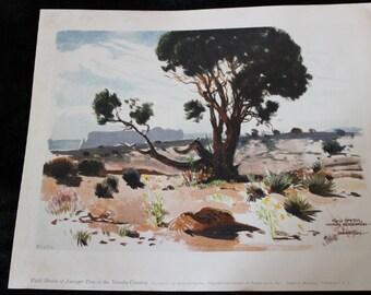RARE James Swinnerton - Field Sketch of Juniper Tree in the Navajo Country - Navajo Reservation, Fine Art Litho