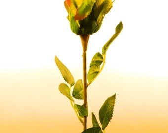 "Silk Rose Bud Bush in Green - 24"" Tall"
