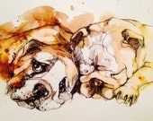 Bulldog pen and ink