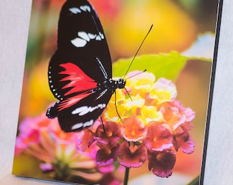 Butterfly on Wooden Panel