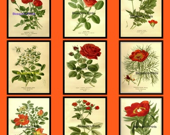 9 pc Flower set from the 1800's