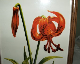 """Crystal Skelley 1986 Print of Tiger Lilies 6"""" x 10"""" Just Stunning"""