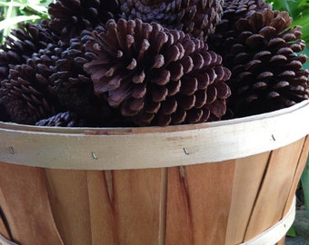 Pine cones-pinecones-craft-project-pine cone project-florida pine-florida pine cones-crafts-brown pine cones-large pine cones-real pine cone
