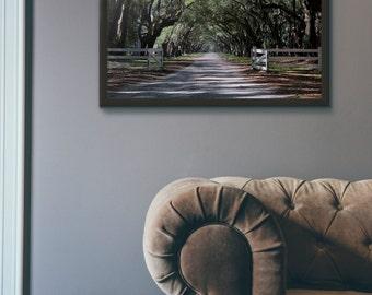 iconic live oaks, wormsloe plantation, savannah, georgia, landscape, photography, fine art print