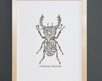 Stag beetle - serigraphy screenprint linocut print beetle