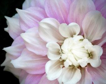 Dahlia, Abstract Photograph, Modern Art, Contemporary Art, Floral, Flower, Modern Floral, Pink