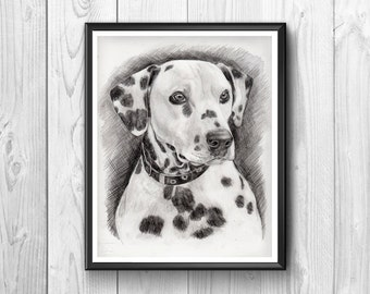 Dog spotted dog harlequin .Magnificent  animal. Penciled, Post for animal lovers.frame that adorns the house.Animal friend of children