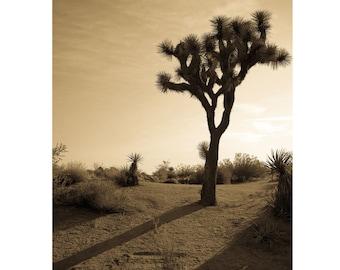 Joshua Tree Print   Desert Landscape photography   wall art home decor