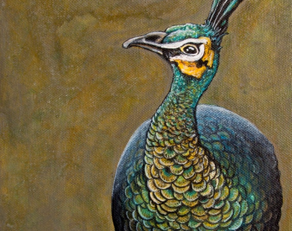 Peacock Images High Resolution