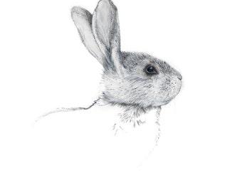 Mr Rabbit 2014 - Fine Art Archival Print