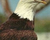Vintage 1980s Postcard Bald Eagle Bird Animal American Symbol Wild Nature Wildlife Card Photochrome Era Postally Unused