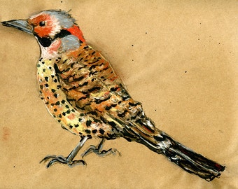 Original Drawing - Northern Flicker - Bird Art in Charcoal, Chalk Pastel & Ink