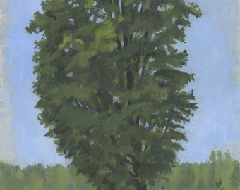 Maple Tree at Lucy Brook Farm: Original Oil Painting Plein Air Landscape