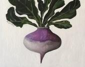"""Rutabaga, Original Acrylic Painting, Botanical Illustration, 8"""" x 8"""" on Wood Panel"""