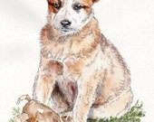 AUSTRALIAN CATTLE DOG Original Watercolor on ink print 11x14 Matted Ready to Frame