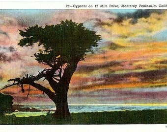 Vintage California Postcard - A Monterey Cypress at Sunset (Unused)