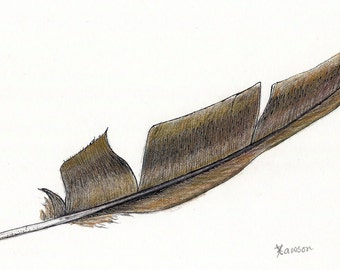 Original feather drawing --  ink and coloured pencil; olive green feather