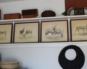 Set of 4 African Wildlife Drawings - Signed P Rose 1966 & 1965 - Scientific Illustration - Wood Frames