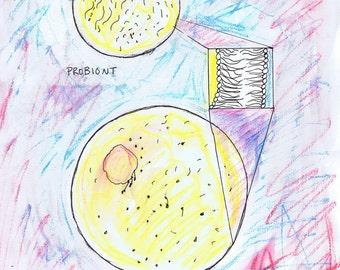 Probiont Prokaryote evolution