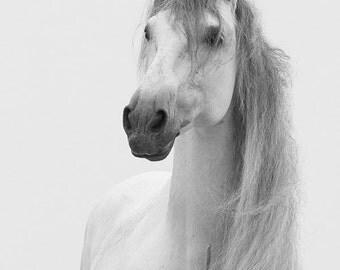 Andalusian Stallion's Mane - Fine Art Horse Photograph - Horse - Black and White - Fine Art Print