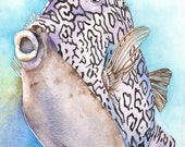 Cowfish print of watercolor painting CF1916 fish painting, fish print-contemporary coastal wall art-underwater scene wall art, A3 size print