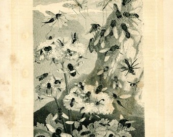 1883 Vintage Print Insects True Flies Black and White Engraving Brehm Diptera
