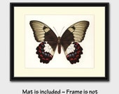 "50% SALE Butterfly Art w/Mat (Monarch Wall Decor, 1960s Gift for Daughter) Vintage Matted Butterfly Art --- ""Orchid Swallowtail"" No. 78-1"