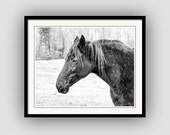 Black and White Horse Photography  Western Equine Equestrian Lover's, Black Horse White Snow Pasture Fine Art Photography Print