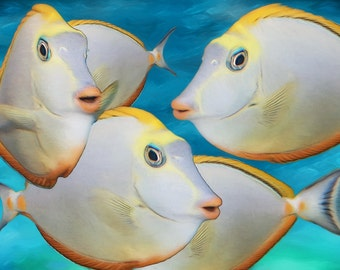 Discus, Naso Tangs, Orange and White Fish, Fish Painting, Fish Print