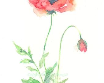Flower, flower print, watercolor print, giclee art, fine art giclee print, Watercolor, Poppy, Original art, watercolor giclee print