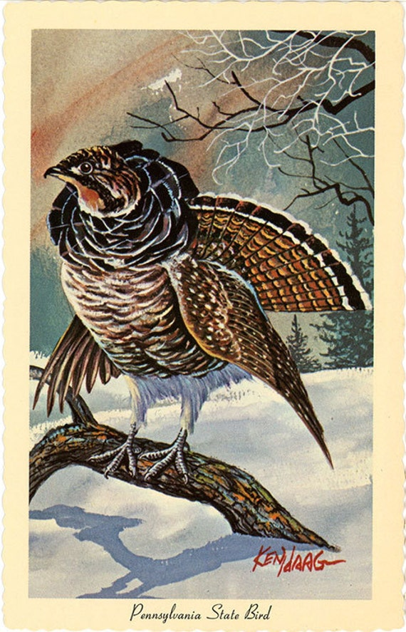 pennsylvania state bird ruffed grouse vintage postcard