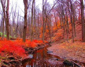 Autumn Colors, photo done and signed by M. Kovalyov, 2015