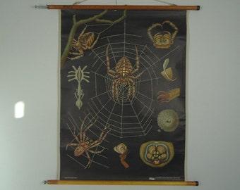 Vintage pull down school chart, Spider