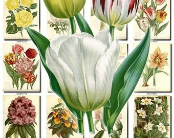 FLOWERS-102 Collection of 284 vintage images paper decoration beautiful florist botanical picture High resolution digital download printable