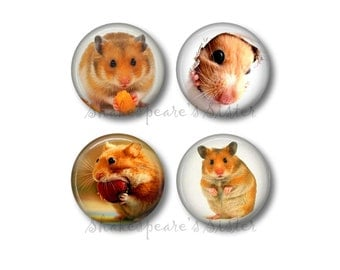 Hamster Magnets - Fridge Magnets - Animal Magnets - 4 Magnets - 1.5 Inch Magnets - Kitchen Magnets