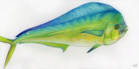Florida Wildlife: Mahi Mahi Signed Print By ArtbyESOlsen
