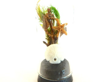 Real SEAHORSE in Dollhouse miniature glass dome - with starfish and sand dollar