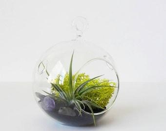 Amethyst Terrarium // Air Plant Terrarium